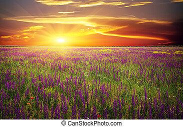 mákok, ellen, ibolya virág, nap, fű, mező, piros