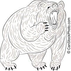 mérges, growls, grizzly tart, háttér., árnykép, fehér