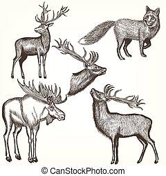 mód, állatok, bevésett, gyűjtés, vektor, kéz, húzott