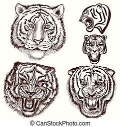 mód, állhatatos, bevésett, tigris, kéz, húzott