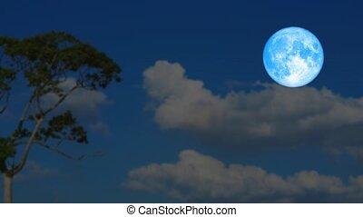 múlás, kék, sötét, emelkedik, árnykép, éjszaka, pálma, hold, fa, hát, idő múltával, felhő, hódprém, ég