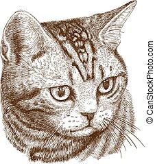 macska, ábra, fej