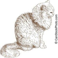 macska, ábra, metszés