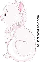 macska, fehér