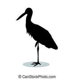 madár, árnykép, fekete, állat, kócsag