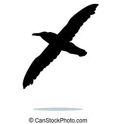 madár, árnykép, fekete, balek, állat