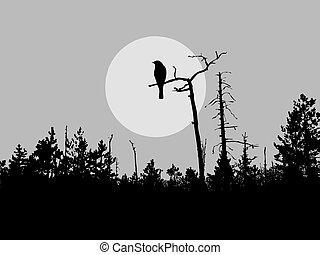madár, árnykép, vektor, fa