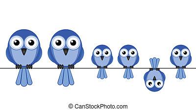 madár, család