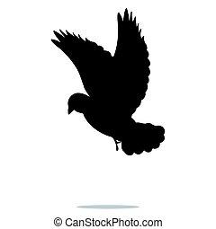 madár, galamb, fekete, árnykép, állat