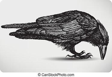 madár, illustration., vektor, fekete, hand-drawing., holló