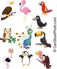 madár, karikatúra, gyűjtés