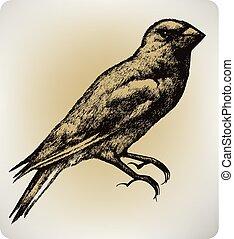 madár, vektor, rajz, kéz, illustration..eps