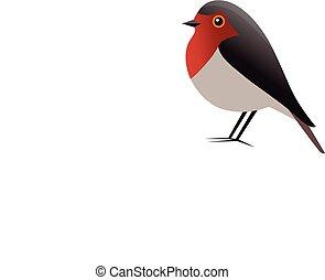 madár, vektor, vörösbegy, clipart