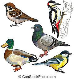 madarak, állhatatos, európa, vad