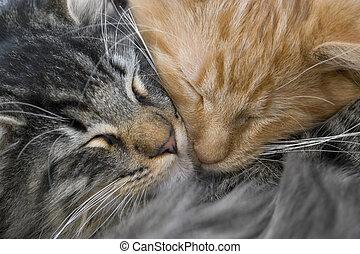 magához ölel, kiscica