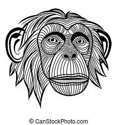 majom, emberszabású majom, csimpánz, fej, állat