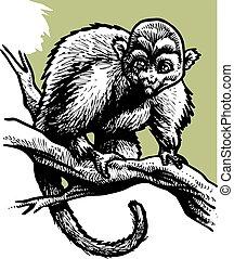 majom, fehér, fekete, vad