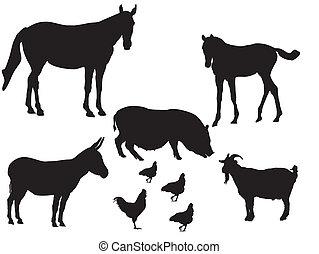major állat