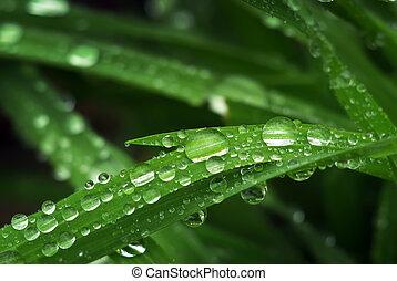 makro, esőcsepp