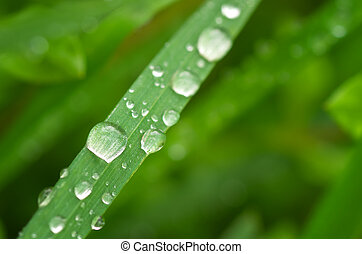 makro, raindrop.