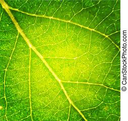 makro, vektor, leaf.