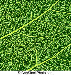makro, zöld, vektor, struktúra