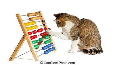 matematikus, ügyes, macska