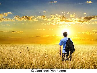 meadow., búza, sárga, ember