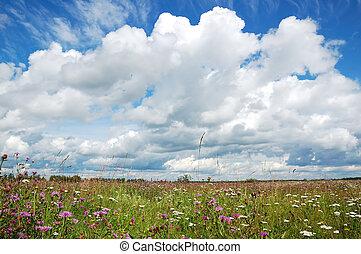 meadow., day., napos, virágzó
