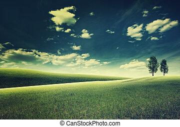 meadow., este, természetes szépség, kivonat parkosít
