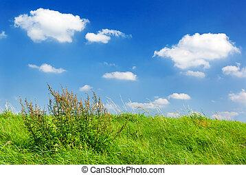 meadow., nyár