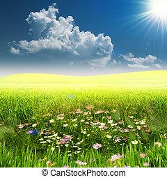 meadow., nyár, természetes, hely, woth, másol, táj