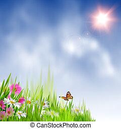 meadow., nyár, természetes szépség, elvont, háttér