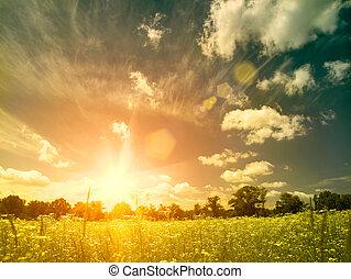 meadow., nyár, természetes szépség, felett, háttér, fényes, napnyugta, vad, kamilla, menstruáció