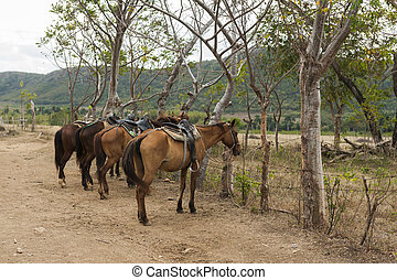 megnyergelt, lovak, kuba, tanya, út, trinidad