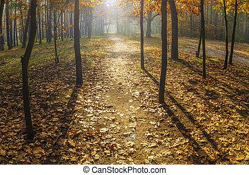 meleg, eltart, ősz, forest., napok