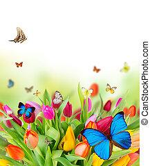 menstruáció, eredet, pillangók, gyönyörű