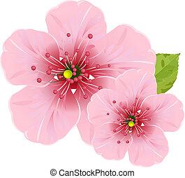 menstruáció, kivirul, cseresznye