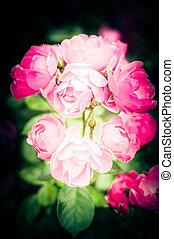 menstruáció, romantikus, rózsaszín rózsa