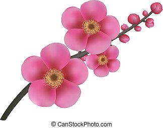 menstruáció, sakura