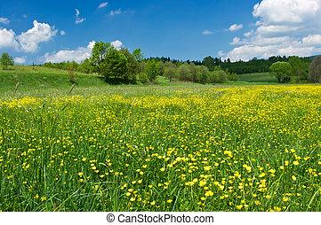 menstruáció, zöld kaszáló, sárga