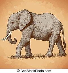 metszés, ábra, elefánt