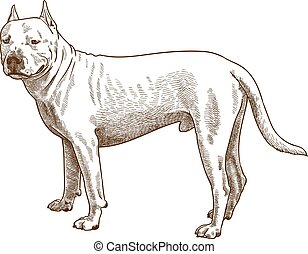 metszés, antik ábra, pitbull