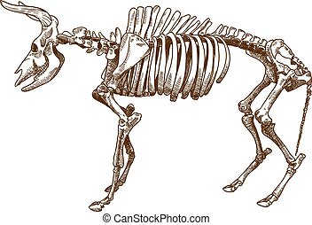 metszés, aurochs, ábra