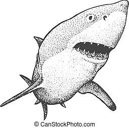 metszés, fehér, cápa, ábra