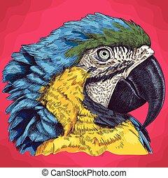 metszés, fej, ara papagáj, ábra