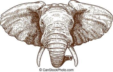 metszés, fej, elefánt