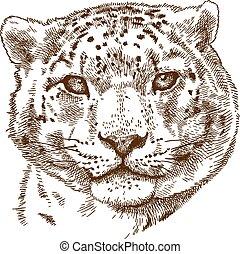 metszés, fej, leopárd, hó, ábra