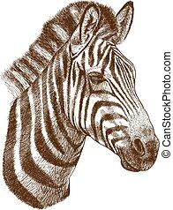 metszés, fej, zebra