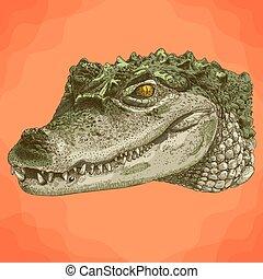 metszés, krokodil, fej, ábra